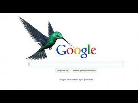 google hummingbirth