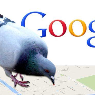 Google Pigeon: cos'è e come funziona?